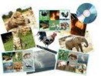 Állathangok CD-vel  (MDDV20620)