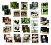 A farm állatai Memóriajáték