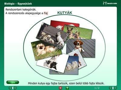Az állatok világa Az állatok országa CD iDoctum